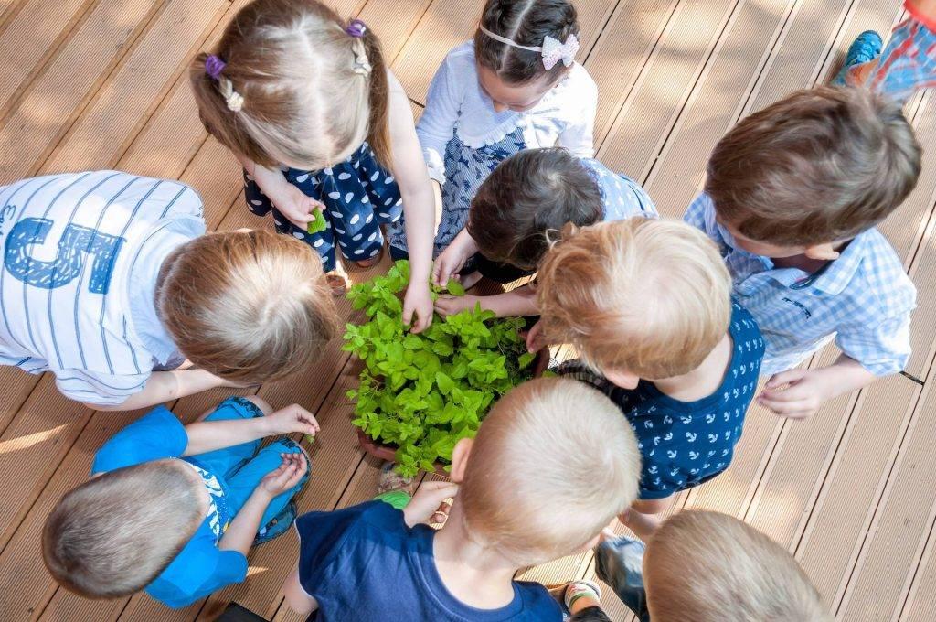 Děti sbírají mátu, Mateřská škola Paleček